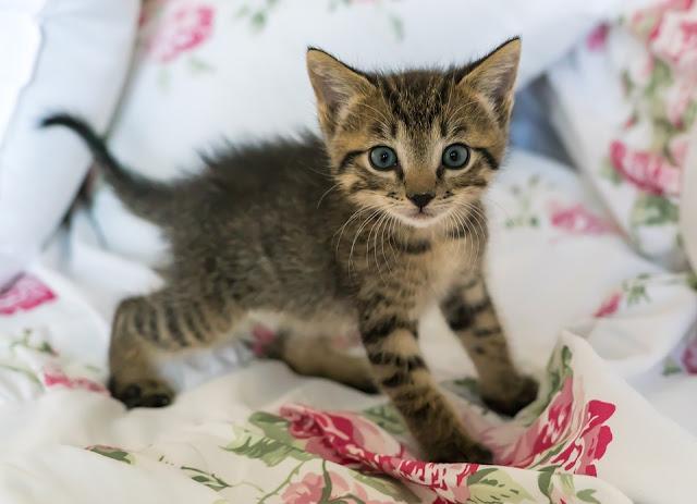 Cute Hyperactive Kitten