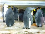 pinguini regali