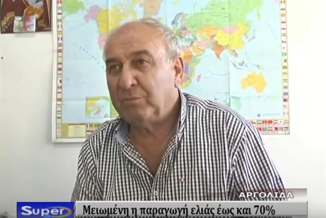 Μειωμένη η παραγωγή ελαιολάδου στην Αργολίδα (βίντεο)