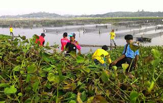 Bupati Klaten Ajak 850 ASN Bersihkan Enceng Gondok Di Rowo Jombor
