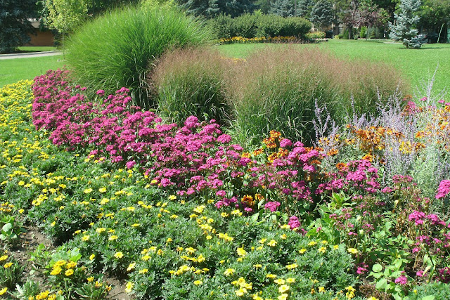 Yellow gazania, phlox against miscanthus backdrop at James Gardens Etobicoke by garden muses: a Toronto gardening blog