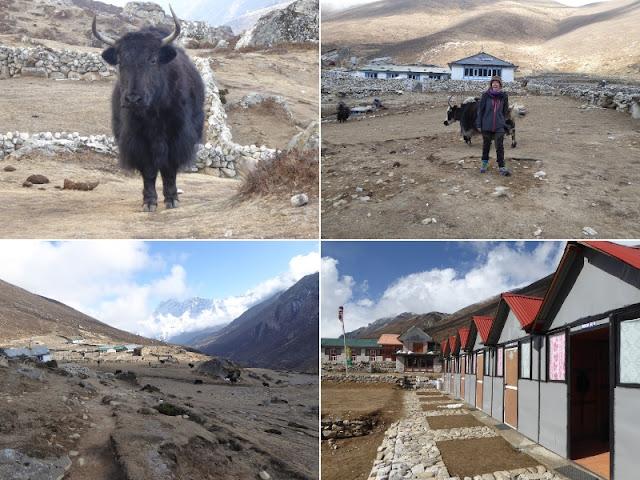 scorci di lungdhen con yak e guest house