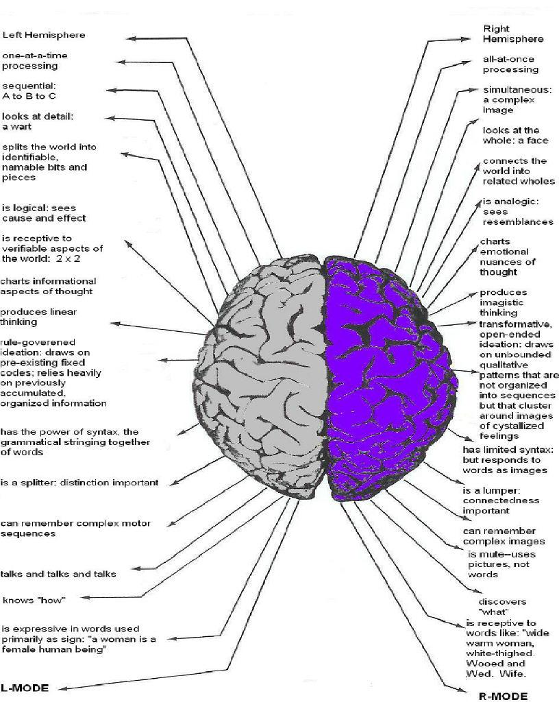 Brain Jack Image: Brain Function Chart