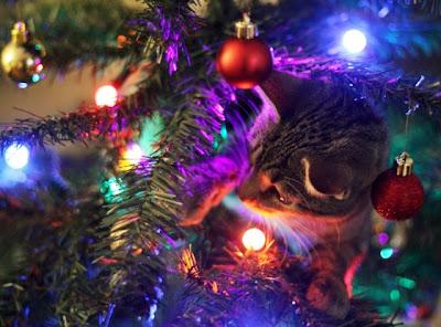 Gatito en arbol de navidad