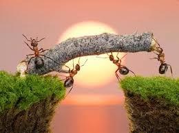 Berusaha baru dapat hasilnya, semut yang rajin,jobdirumah,