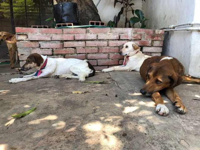 Emigrantes venezolanos dejan a sus mascotas abandonadas en las calles