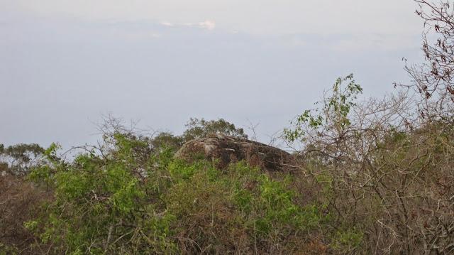 """El leopardo"" del Parque Nacional de Yala (Sri Lanka)"