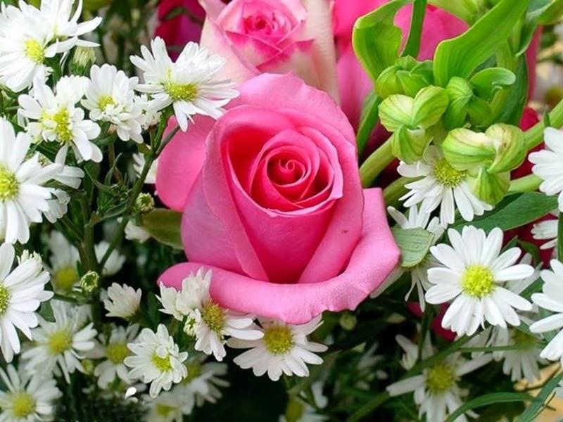 Free download beautiful rose love image
