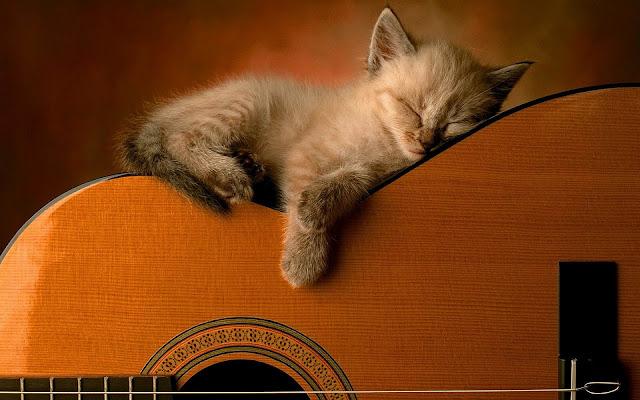 Kat slaapt op gitaar