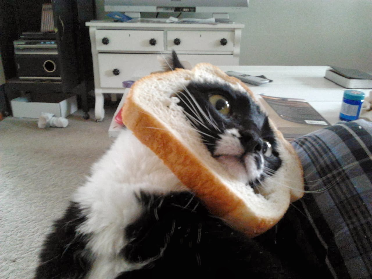 Funny cats - part 88 (40 pics + 10 gifs), cat inbread, cat stuck his face in a bread