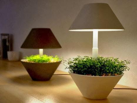 Lightpot plantas de dise o para rincones con poca luz - Plantas de interior que necesitan poca luz ...