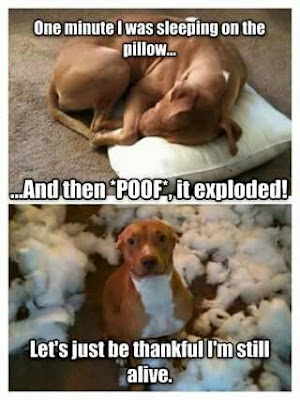 Dog Humor : One minute i was sleeping on the pillow and....