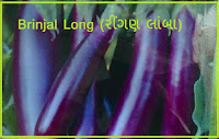 Brinjal Vegetable Seeds Ahmedabad