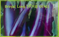 Brinjal Vegetable Seeds Ahmedabad