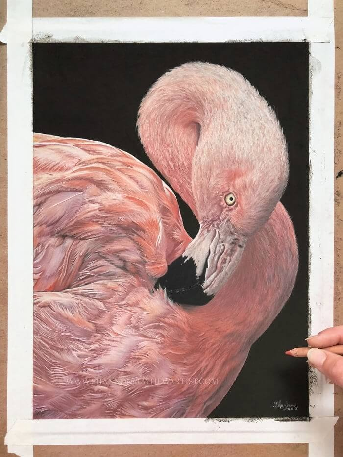 06-Flamingo-Shannon-Mayhew-Drawings-by-Domestic-and-wildlife-Animal-Artist-www-designstack-co