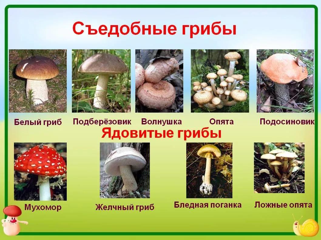 ядовитые грибы фото и название в россии