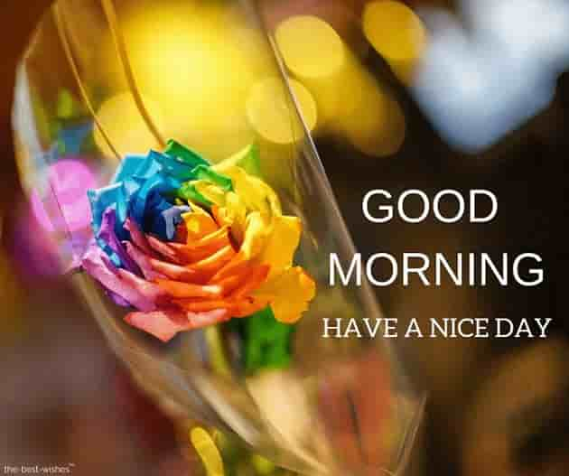 good morning images with colorful rose