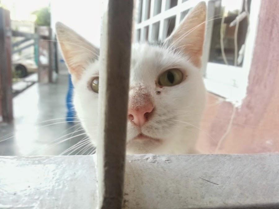 """<img src=""""gatos curiosos.jpg"""" alt=""""curiosidades sobre gatos"""">"""