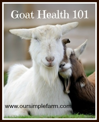 Goat Health 101 - Internal Parasites - Our Simple Farm