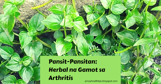 pansit pansitan herbal na gamot sa arthritis