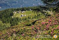 Alpe Deccia con fioritura