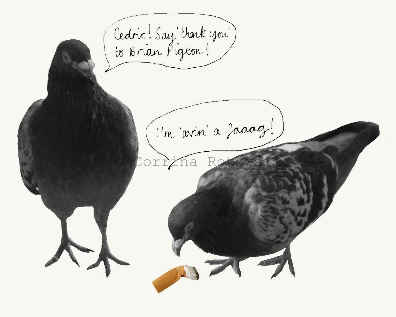 depuydt cédric pigeon