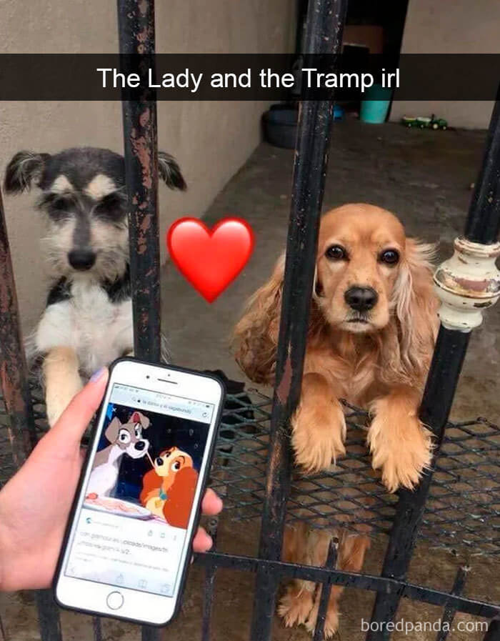 26 Hilariously Adorable Dog Snapchats