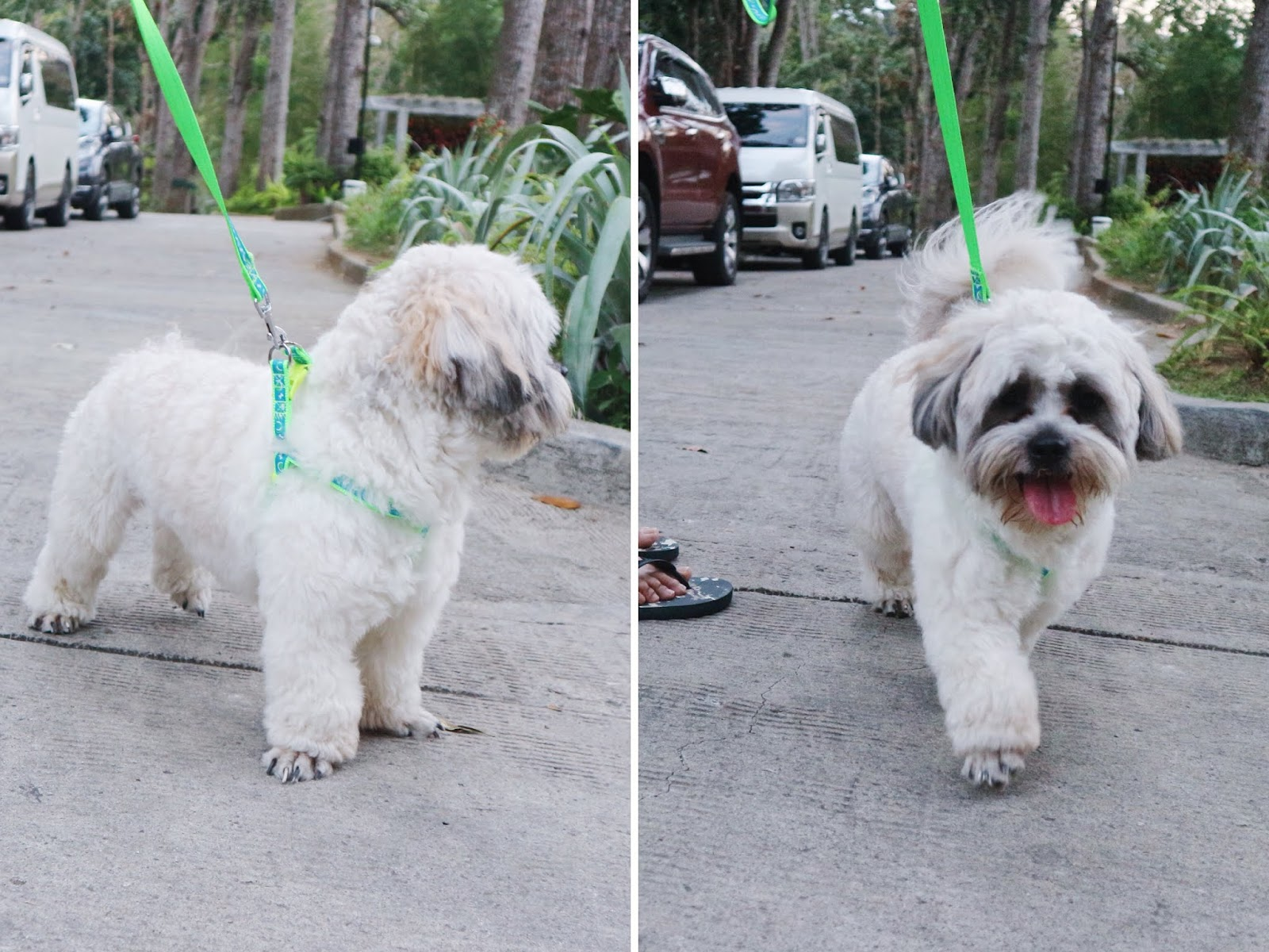 Pet Friendly Resort Near Manila