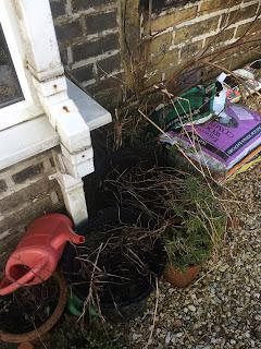 gardening, herb garden, pig row, saddleworth