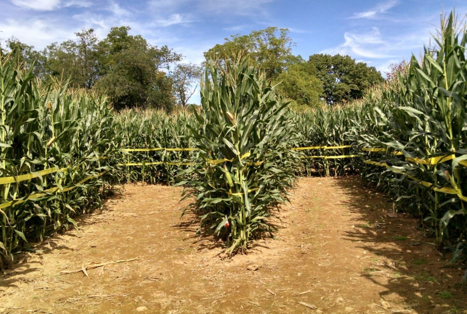 Кукурузный лабиринт, Честер, Нью-Джерси