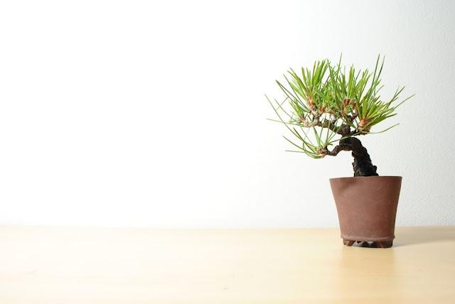 ミニ盆栽イメージ