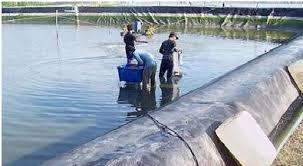 5 Cara Mencegah Penyakit pada ikan