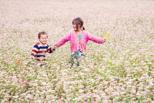 Top destinations to enjoy buckwheat blooming in Vietnam