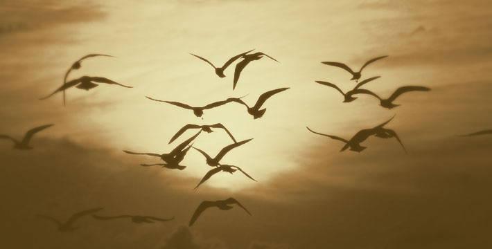 फिरी येता परतुनी - मराठी कविता | Phiri Yeta Partuni - Marathi Kavita