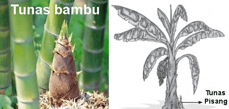 42 Gambar Hewan Yang Berkembang Biak Dengan Cara Vegetatif Gratis