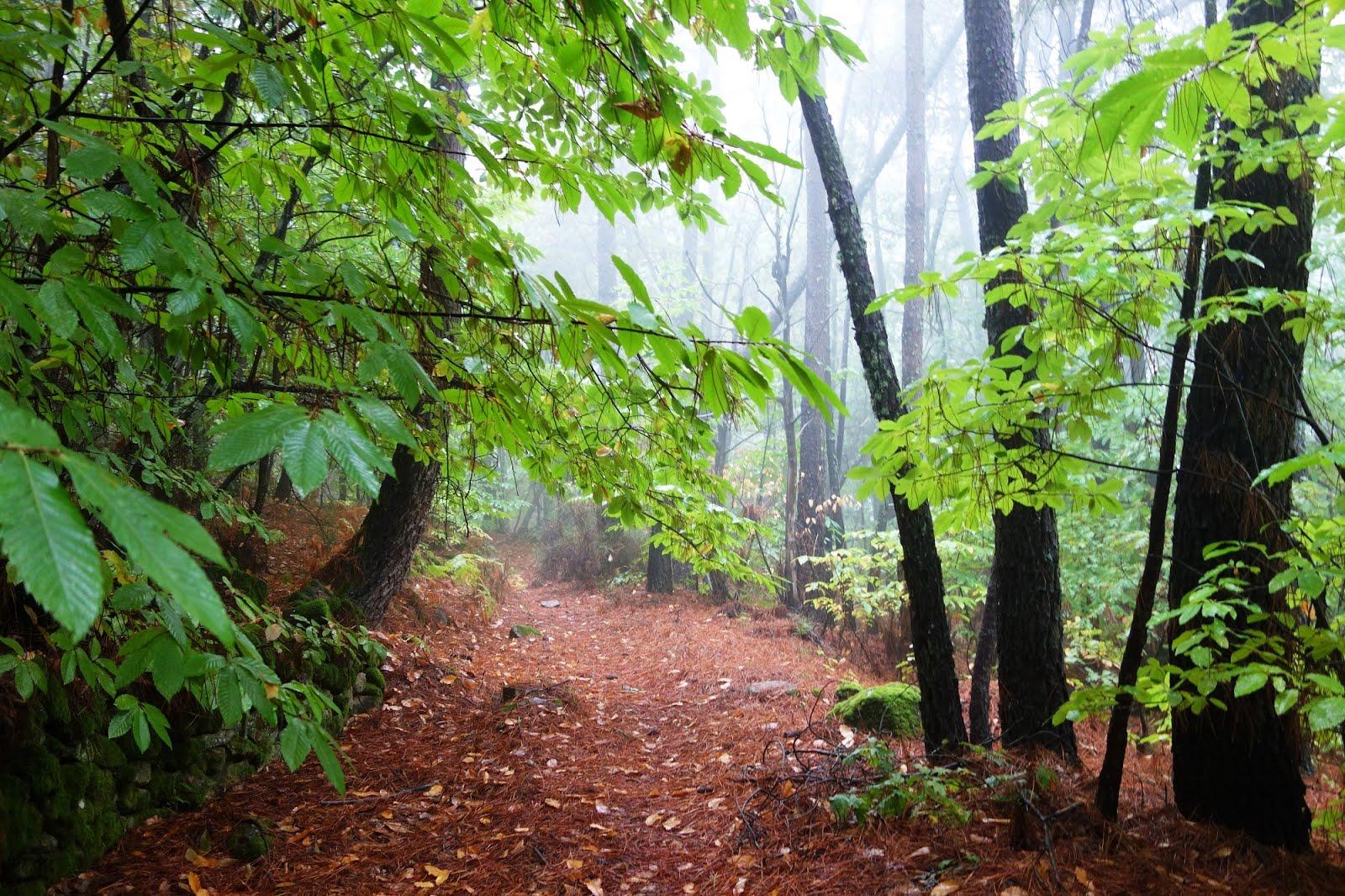 Entre Montañas. Blog Sobre La Sierra De Gata Extremeña Y