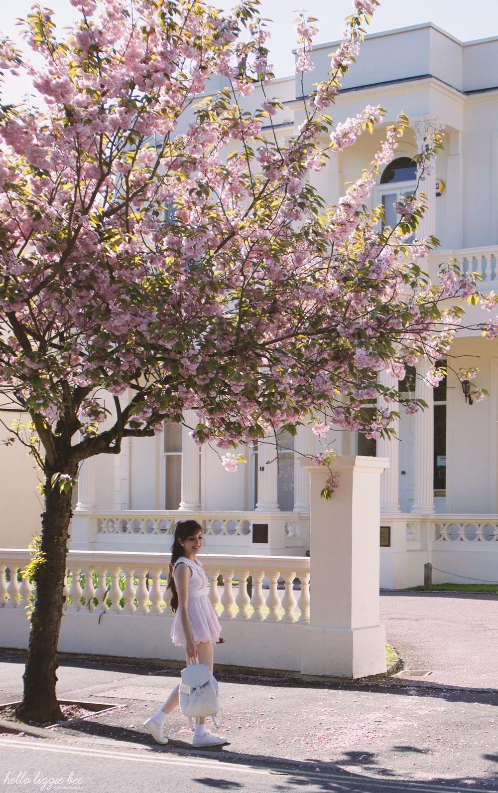 leamington spa, cherry blossoms