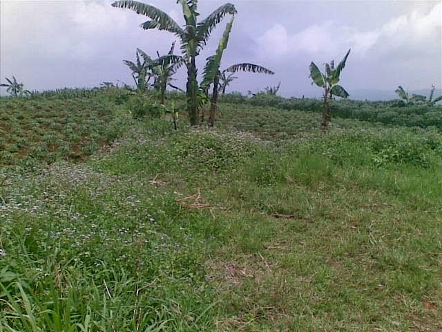 Foto(5227) Jual Tanah luas 25 Ha, Lokasi Cipanas-sukaresmi Jual tanah di cipanas jual tanah di puncak jual tanah di taman bunga nusantara