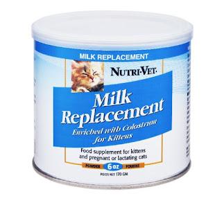 Susu yang Cocok untuk Anak Kucing Baru Lahir