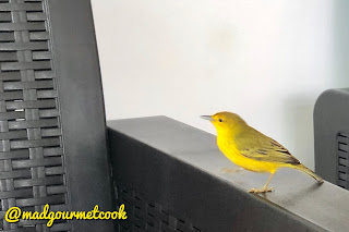 Yellow Finch who catches flies