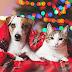 ΑΠΟ 1/1! Πού απαγορεύονται οι πωλήσεις ζώων από pet shops...