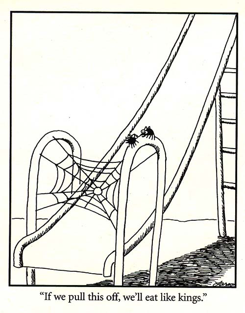 Funny Slide Spider Web Trap Cartoon Joke Picture
