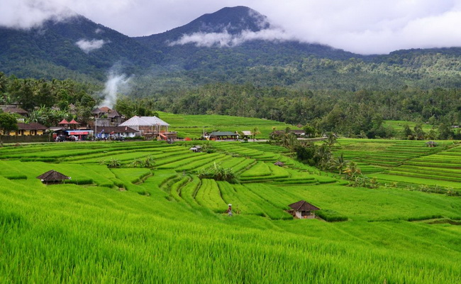 Xvlor.com Jatiluwih terraced rice field is Balinese farm by Subak system culture