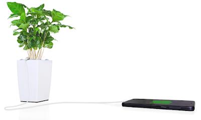 Plantas que cargan tu teléfono móvil