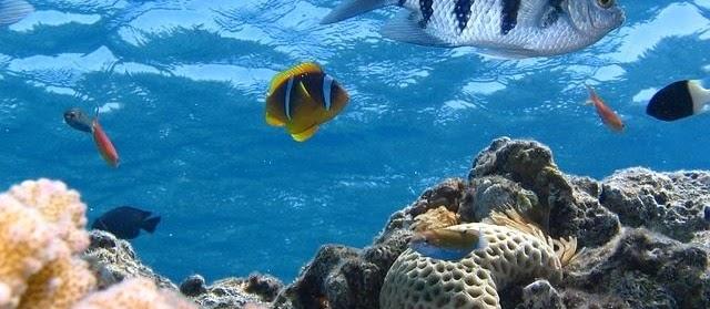 Nama Ikan Laut Karang dan Gambarnya Lengkap