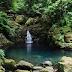Floresta Laurissilva Ilha da Madeira