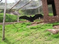 zoo mundo andino