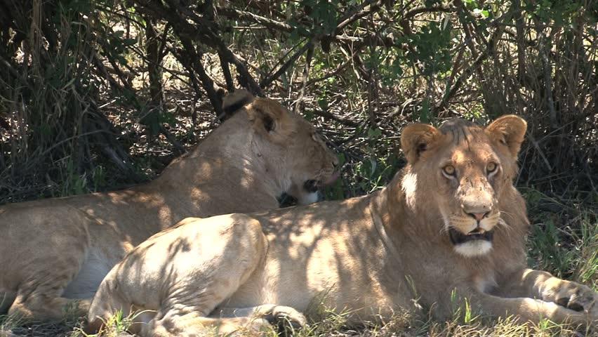 masai mara safaribooking