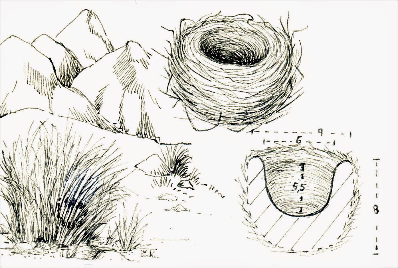 nidos de Cachirla
