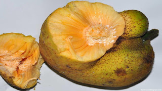 Lakoocha fruit images wallpaper
